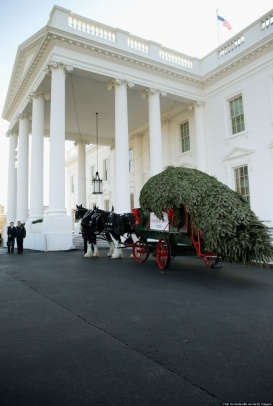 White House Tree 2013