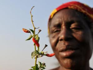 Chili Grower in Zambia - via world wildlife.org