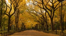 Central Park - The Great Mall - ©Central Park Conservancy